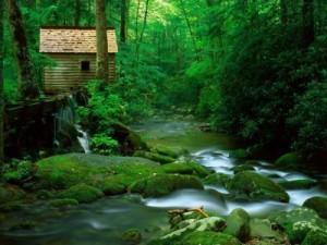 400_1204161220_casa-del-bosque-300x225